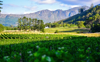 Cape Town wine tours – Everything you need to know
