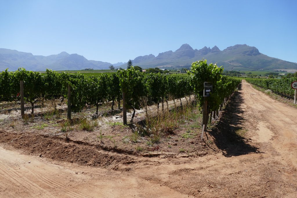 Get up close with nature in Stellenbosch with the bikes and wines tour